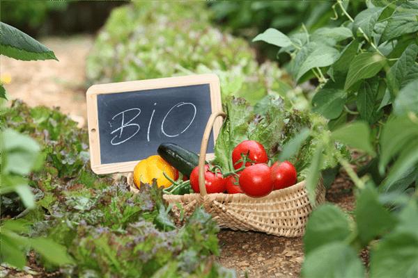 Resultado de imagem para alimentos biológicos