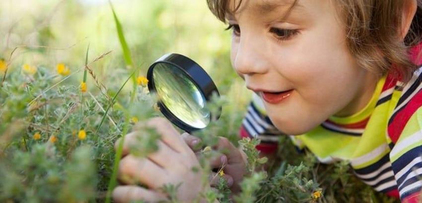 Inteligência Naturalista (entender os seres vivos e a natureza)